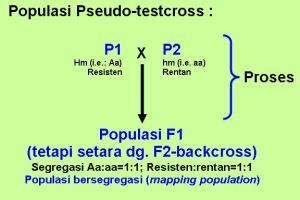 Pseudo-testcross